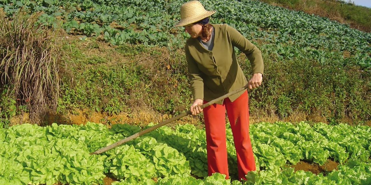 Agricultura familiar responde por grande parte da produção de alimentos no Brasil